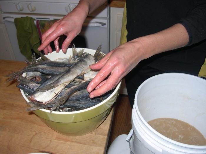 Если рыба готовится для вяления, ее перед засолкой не чистят и не потрошат, а только хорошенько моют.