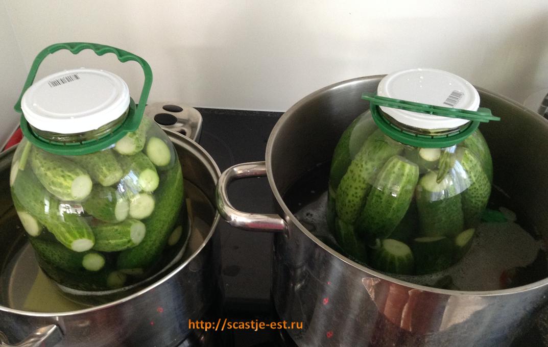 Salatalık kütükleri. Turşular ve salatalar hazırlama yöntemleri ve tarifleri